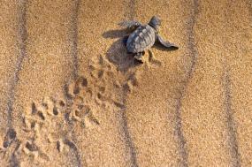 Turtles and Tortuguero Independent Adventure tour