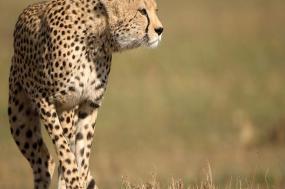 Kruger & Swazi Overland tour