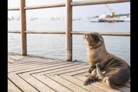 Galapagos Extension - South and Eastern Islands tour