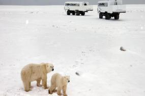 Churchill Polar Bears Independent Adventure tour