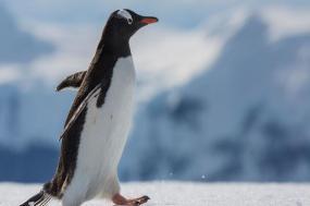 Falklands, South Georgia & Antarctica tour