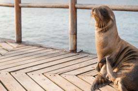 Galápagos on a Shoestring tour
