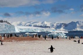 Antarctica, Falklands & South Georgia via Buenos Aires