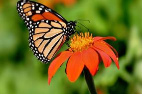 Mexico Monarch Butterfly Trail tour