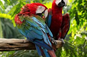 Inca Trail & the Amazon Rainforest