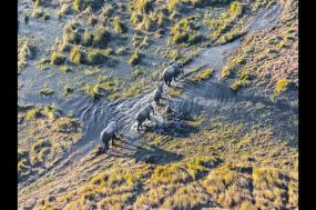 Botswana Wildlife Safari tour