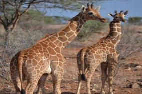 Kenya & Tanzania Private Safari with Zanzibar  Stone Town & Beach Stay