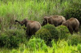 Best of Borneo tour