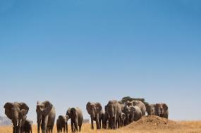 Safari in Kenya & Tanzania tour