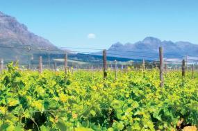 Kruger, Coast & Cape tour