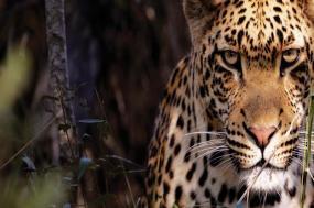 Cape to Kruger Adventure tour