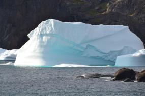 Disko Bay - Bowhead Whales tour
