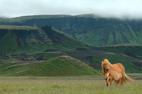 Iceland Family Private tour