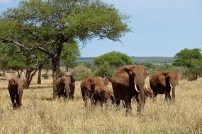 Tanzania Highlights Safari – Kawaida (Bronze) Series tour