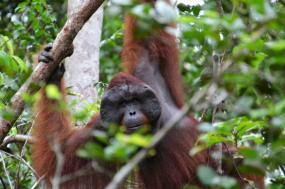 Wild Encounters from Borneo to Bali  tour