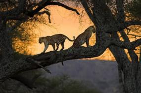 Jaguar's Trail: Pantanal to Amazon  tour