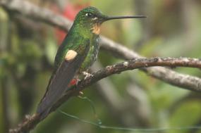 Ecuador: Birding & Natural History tour