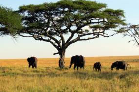Family Kenya & Tanzania Safari  tour