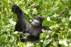 3 Days Uganda Gorilla Trekking Safari tour