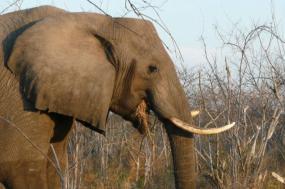 Ultimate Botswana Family Adventure: Okavango Delta and Makgadikgadi Pans tour