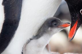 Antarctica Christmas Cruise tour