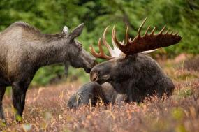 Denali National Park & Wild Alaska tour