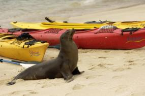 Galapagos Kayaking Expedition tour