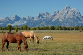 All Inclusive Ranch Vacations tour