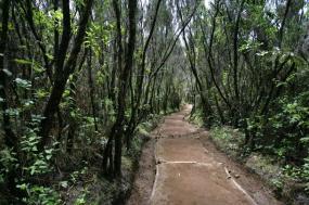 Kilimanjaro Climb-6 days Rongai Route tour