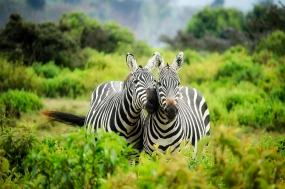 Game Safari Kenya tour