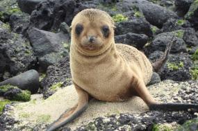 Galápagos Wildlife Adventure Cruise tour
