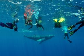 Whale Encounters - Dominican Republic tour