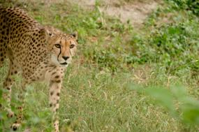 7 Days 6 Nights Safari – From Chimps To The Great Rift