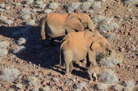 5 Days Kenya Safari Aberdares / The Ark / Lake Nakuru / Masai Mara