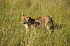 4 Days Tanzania Lodge Safari