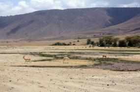 8-Day – The Hemingway Wing Safaris tour