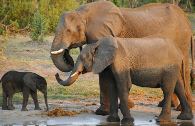 South Africa Family Private tour