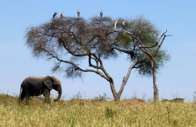 At Your Pace: The Wild Beauty of Kenya  tour