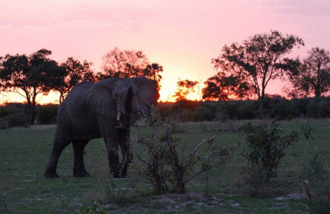 Extension: Victoria Falls and Chobe tour