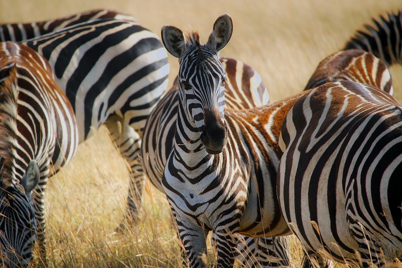 South Africa Wildlife Safari and the Garden Route tour