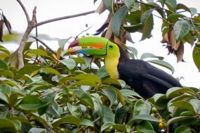 Pura Vida in Costa Rica tour