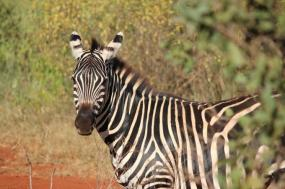 Kenya Wildlife Adventures tour