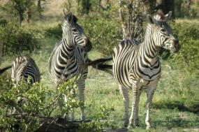 Wilderness Okavango Magic Safari tour
