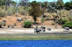 Botswana Flying Safari tour