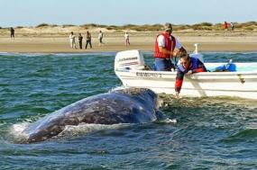 Kayak & Whale Watching Combo tour