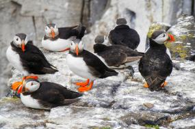 Norway and Scotland: Fjordlands to the Inner Hebrides  tour