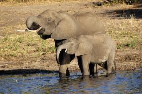 Botswana Safari Victoria Falls to Maun
