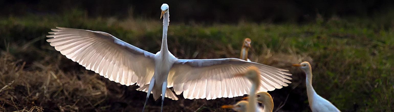 Asian Birdwatching tour