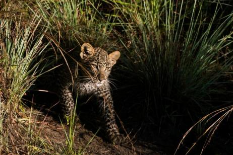 Photographic Safari tour