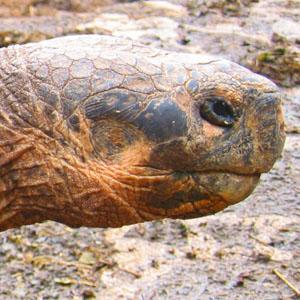 Galápagos Highlights & Peru with Nazca Lines tour